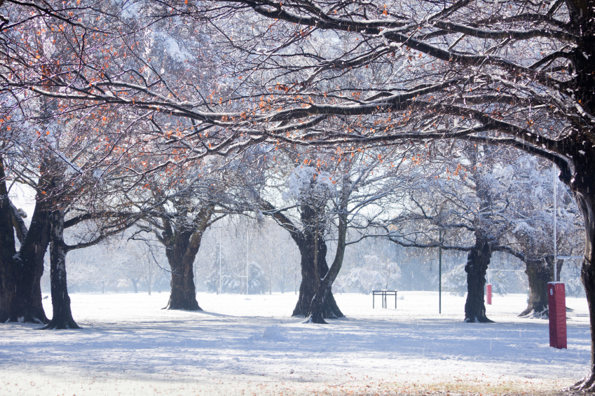 Hagley park in snow